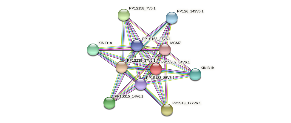 PP1S202_84V6.1 protein (Physcomitrella patens) - STRING interaction network