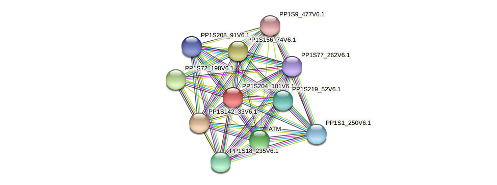 PP1S204_101V6.1 protein (Physcomitrella patens) - STRING interaction network
