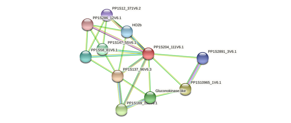 PP1S204_111V6.1 protein (Physcomitrella patens) - STRING interaction network