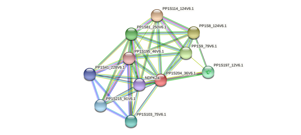 PP1S204_36V6.1 protein (Physcomitrella patens) - STRING interaction network