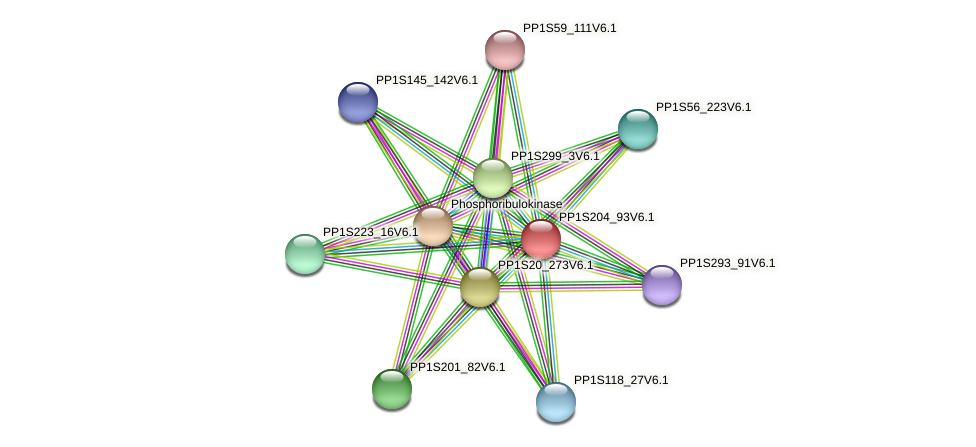 PP1S204_93V6.1 protein (Physcomitrella patens) - STRING interaction network