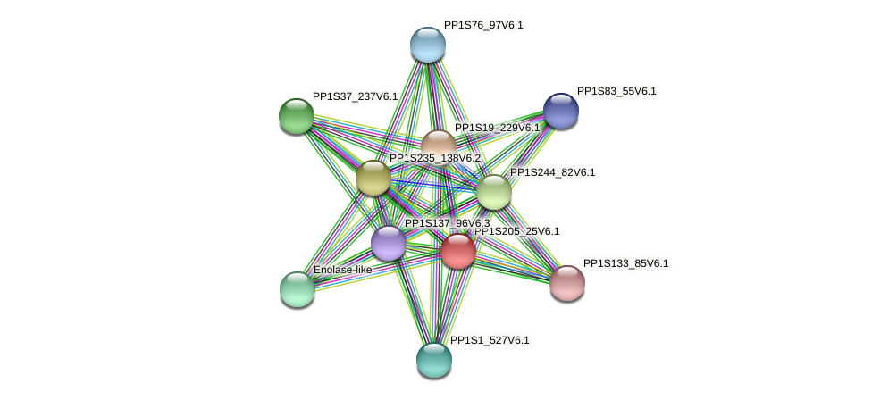 PP1S205_25V6.1 protein (Physcomitrella patens) - STRING interaction network