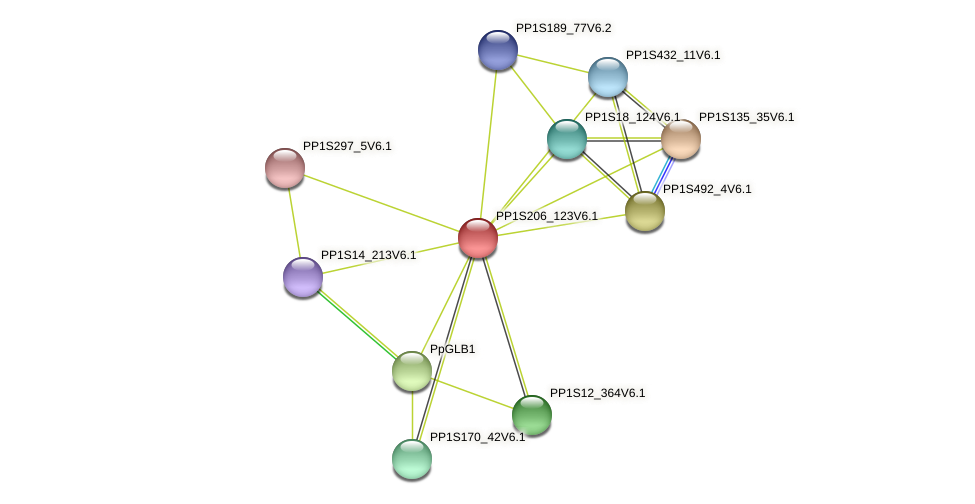 PP1S206_123V6.1 protein (Physcomitrella patens) - STRING interaction network