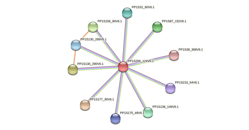 PP1S206_124V6.1 protein (Physcomitrella patens) - STRING interaction network