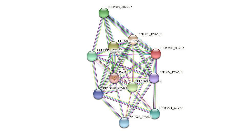 PP1S206_38V6.1 protein (Physcomitrella patens) - STRING interaction network