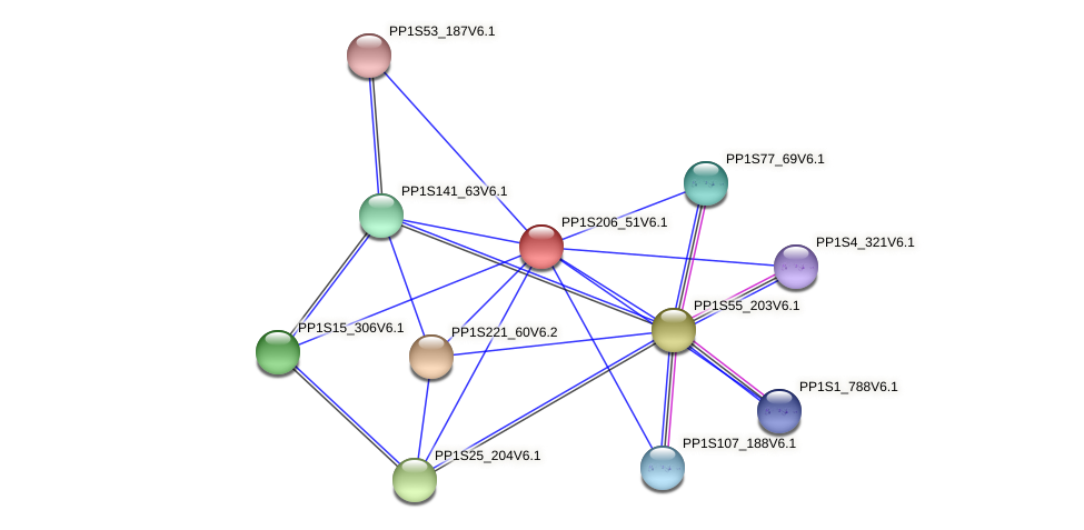 PP1S206_51V6.1 protein (Physcomitrella patens) - STRING interaction network