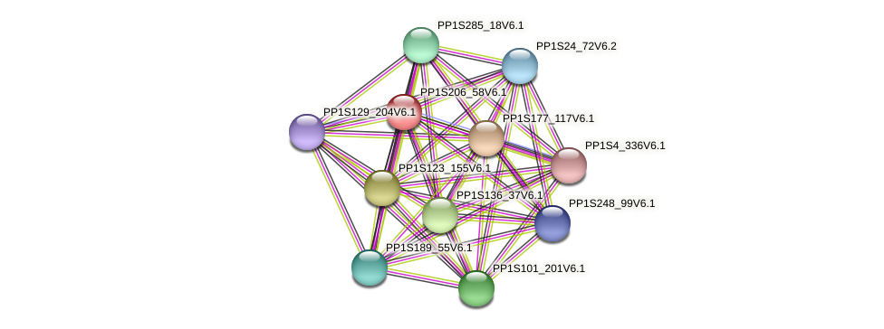 PP1S206_58V6.1 protein (Physcomitrella patens) - STRING interaction network