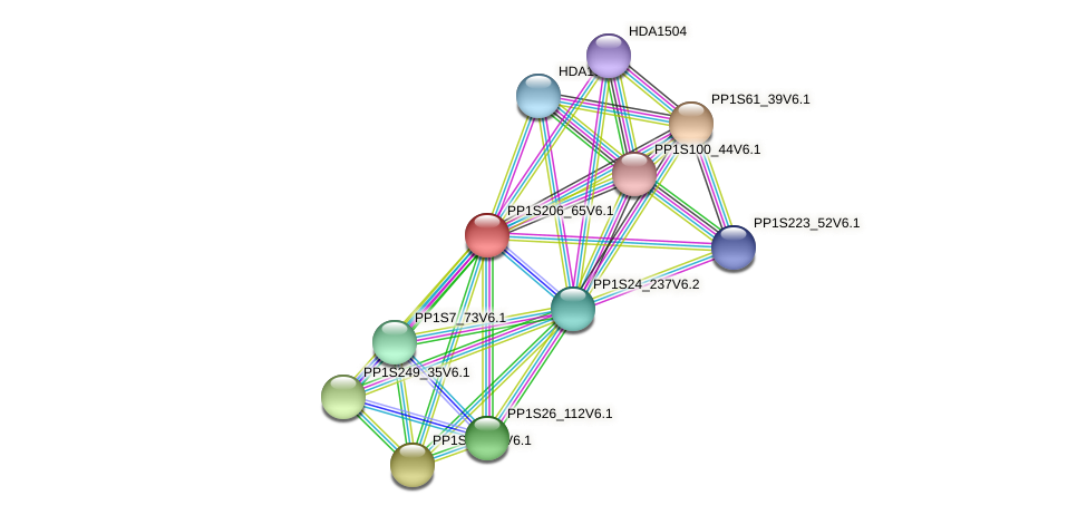 PP1S206_65V6.1 protein (Physcomitrella patens) - STRING interaction network