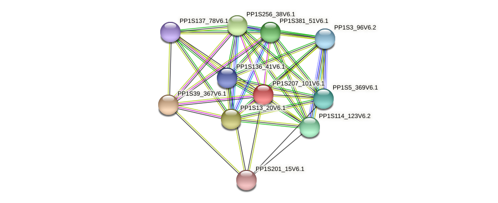 PP1S207_101V6.1 protein (Physcomitrella patens) - STRING interaction network
