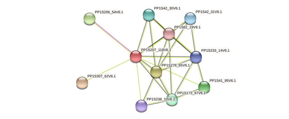 PP1S207_118V6.1 protein (Physcomitrella patens) - STRING interaction network