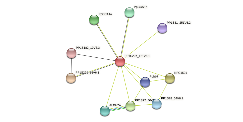 PP1S207_121V6.1 protein (Physcomitrella patens) - STRING interaction network