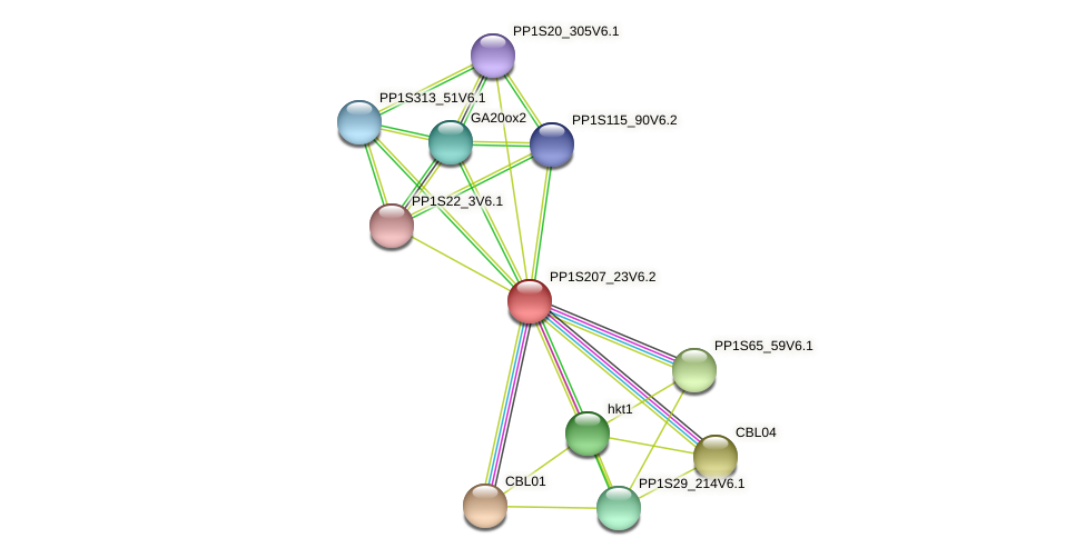 PP1S207_23V6.1 protein (Physcomitrella patens) - STRING interaction network