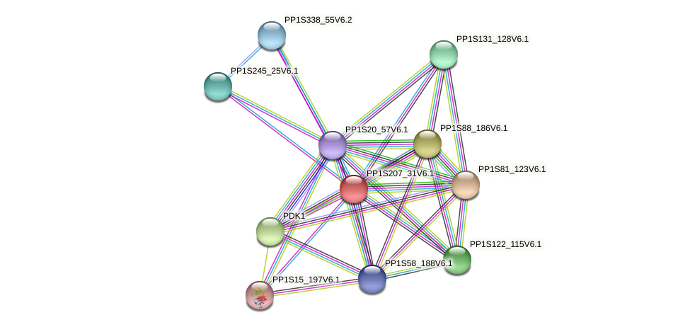 PP1S207_31V6.1 protein (Physcomitrella patens) - STRING interaction network