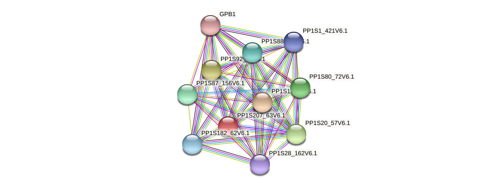 PP1S207_63V6.1 protein (Physcomitrella patens) - STRING interaction network