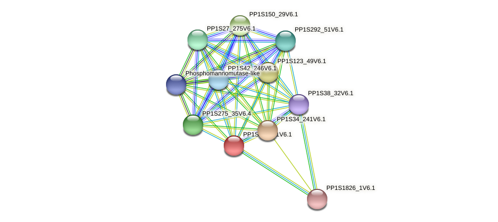 PP1S207_81V6.1 protein (Physcomitrella patens) - STRING interaction network