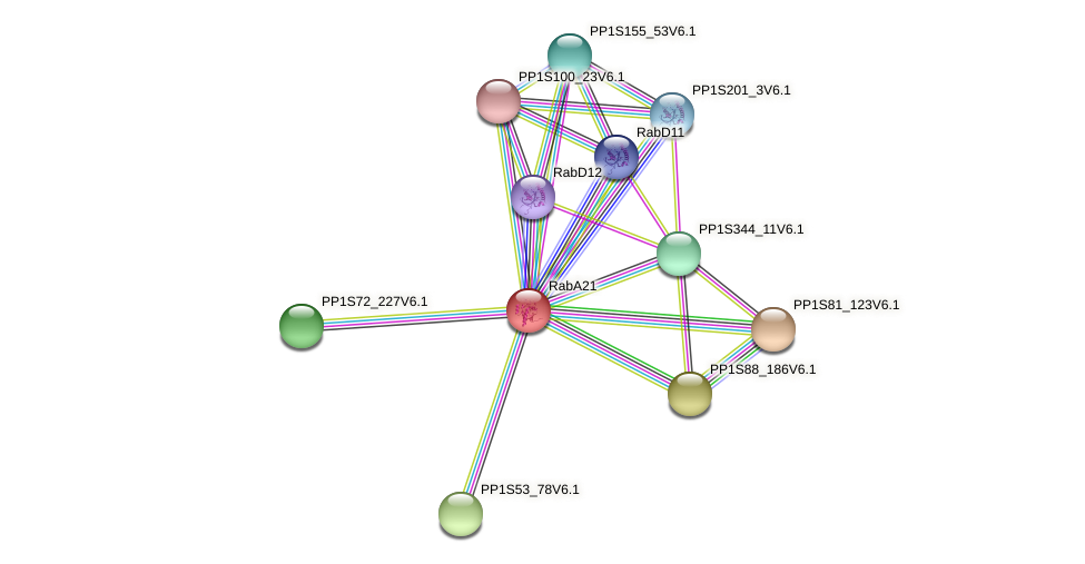 RabA21 protein (Physcomitrella patens) - STRING interaction network