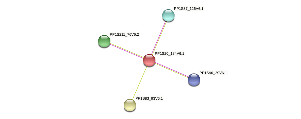 PP1S20_184V6.1 protein (Physcomitrella patens) - STRING interaction network