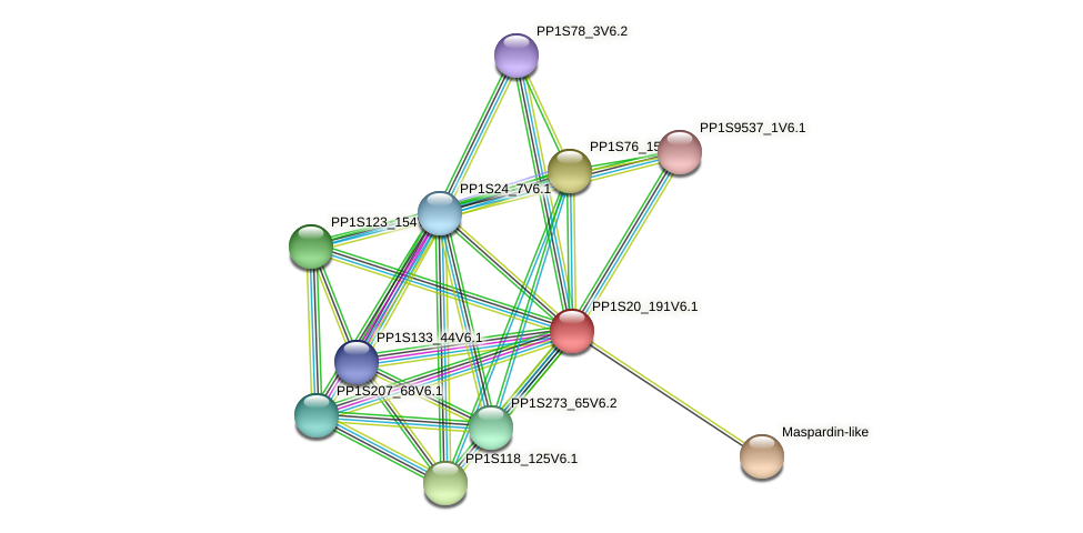 PP1S20_191V6.1 protein (Physcomitrella patens) - STRING interaction network