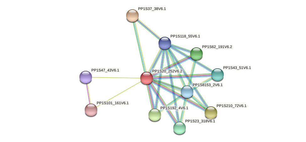 PP1S20_252V6.2 protein (Physcomitrella patens) - STRING interaction network