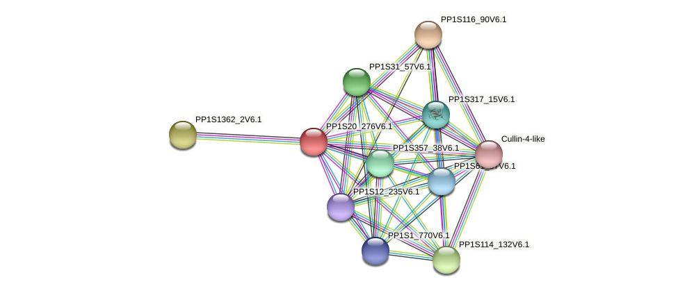 PP1S20_276V6.1 protein (Physcomitrella patens) - STRING interaction network