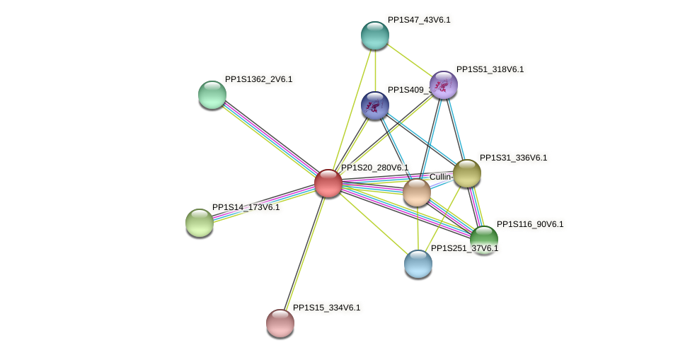 PP1S20_280V6.1 protein (Physcomitrella patens) - STRING interaction network