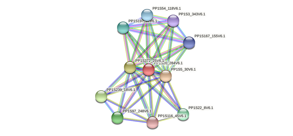 PP1S20_284V6.1 protein (Physcomitrella patens) - STRING interaction network