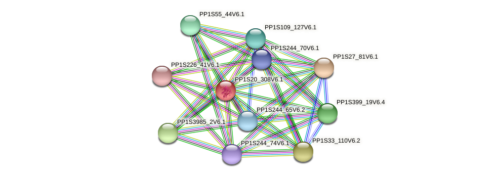PP1S20_308V6.1 protein (Physcomitrella patens) - STRING interaction network