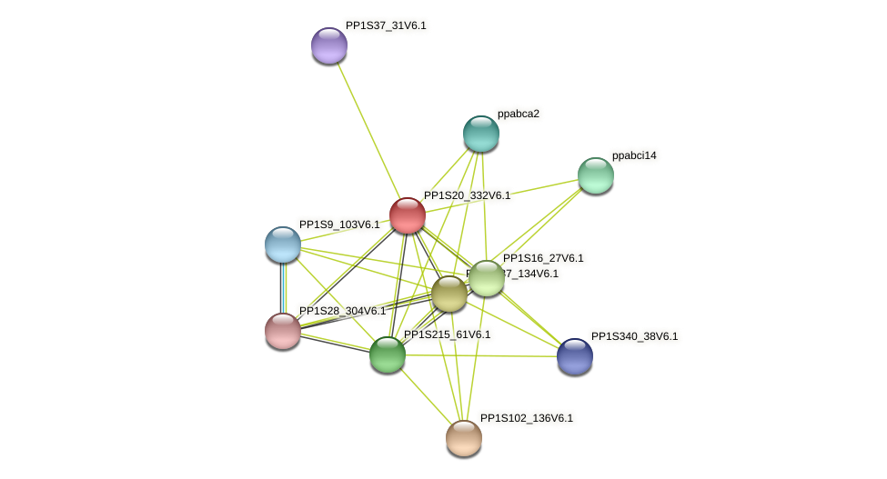 PP1S20_332V6.1 protein (Physcomitrella patens) - STRING interaction network