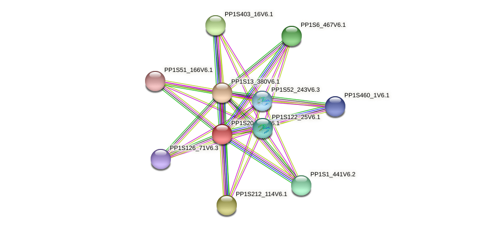 PP1S20_335V6.1 protein (Physcomitrella patens) - STRING interaction network