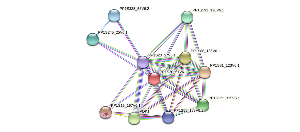 PP1S20_61V6.1 protein (Physcomitrella patens) - STRING interaction network