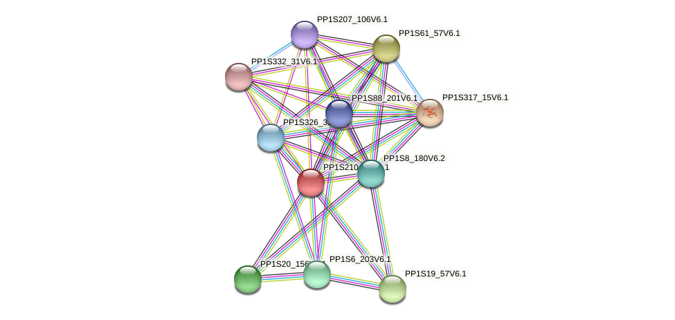 PP1S210_63V6.1 protein (Physcomitrella patens) - STRING interaction network