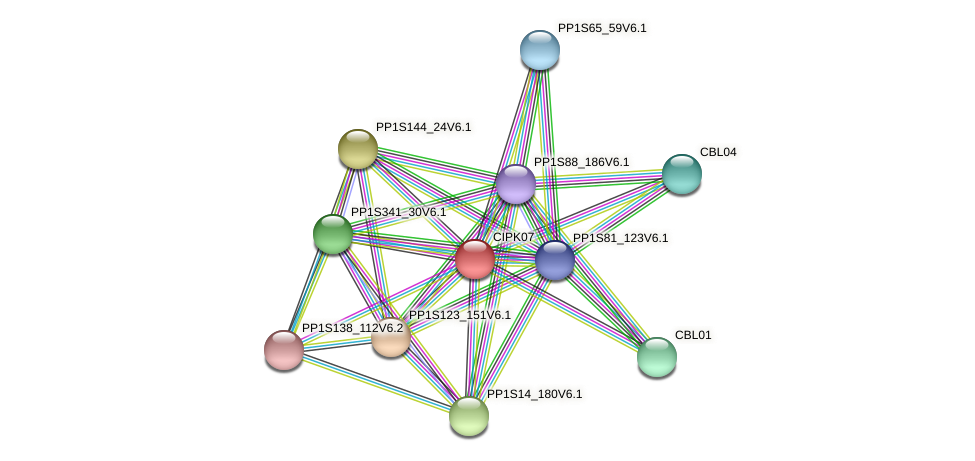 CIPK07 protein (Physcomitrella patens) - STRING interaction network