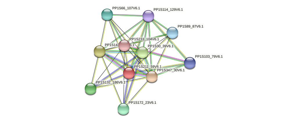 PP1S211_59V6.1 protein (Physcomitrella patens) - STRING interaction network