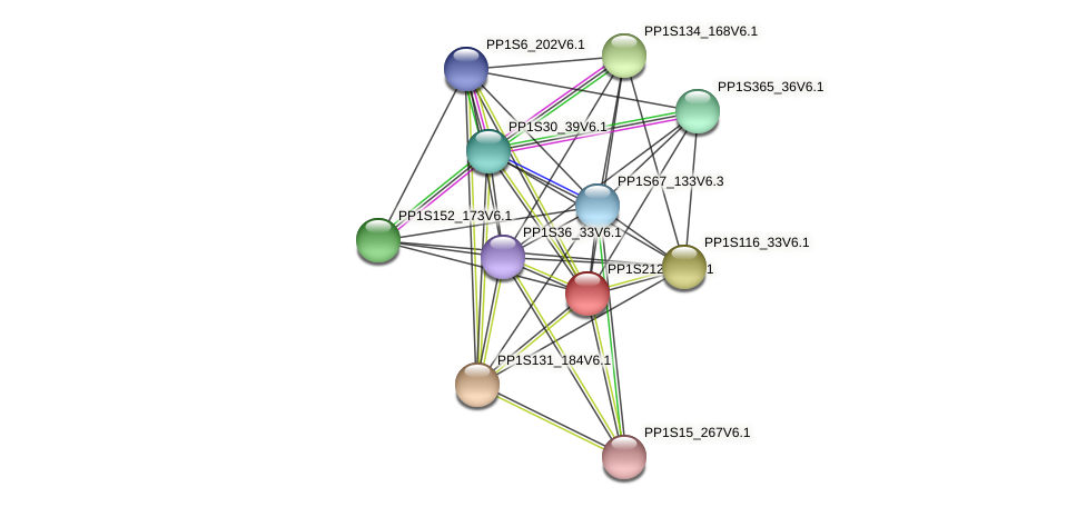 PP1S212_55V6.1 protein (Physcomitrella patens) - STRING interaction network