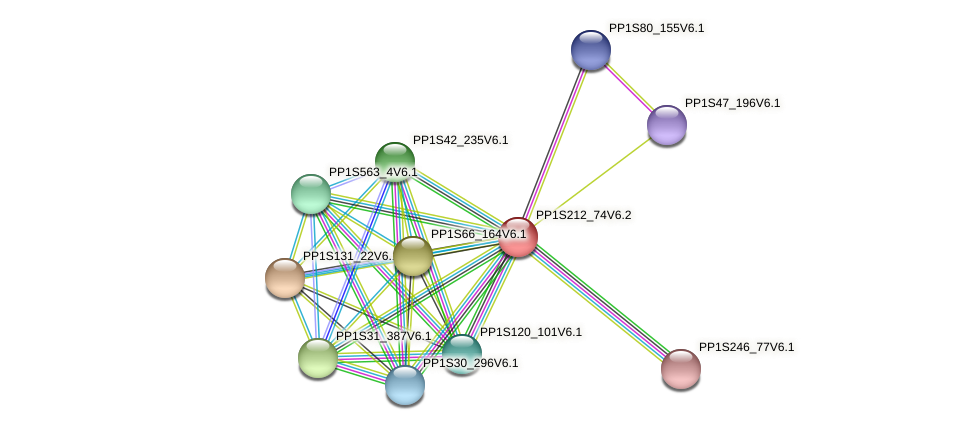 PP1S212_74V6.2 protein (Physcomitrella patens) - STRING interaction network