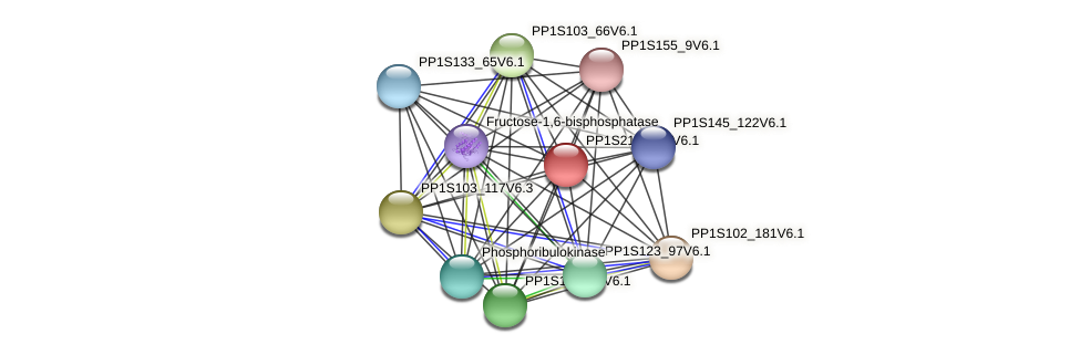 PP1S213_121V6.1 protein (Physcomitrella patens) - STRING interaction network