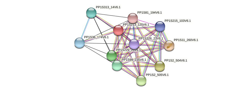 PP1S213_125V6.1 protein (Physcomitrella patens) - STRING interaction network