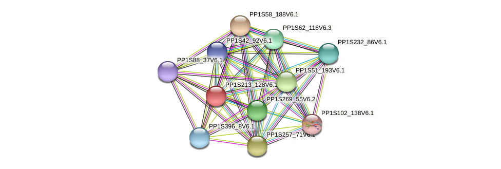 PP1S213_128V6.1 protein (Physcomitrella patens) - STRING interaction network