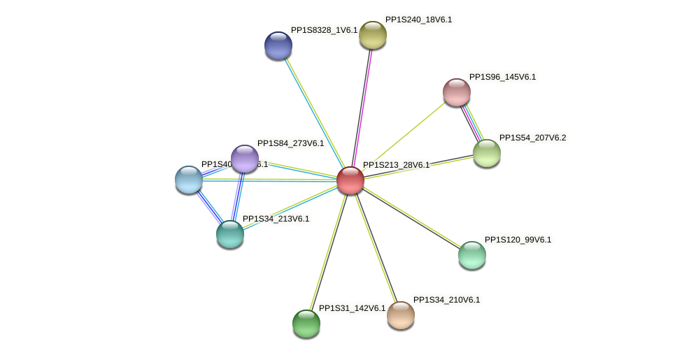 PP1S213_28V6.1 protein (Physcomitrella patens) - STRING interaction network