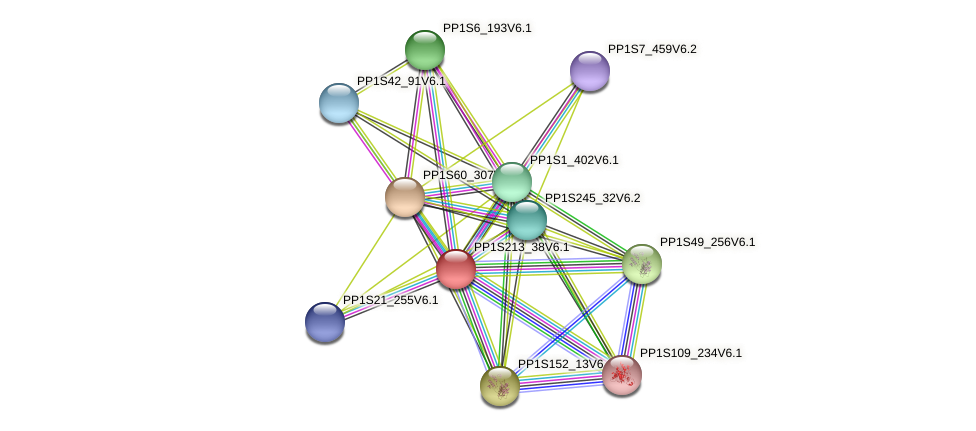 PP1S213_38V6.1 protein (Physcomitrella patens) - STRING interaction network