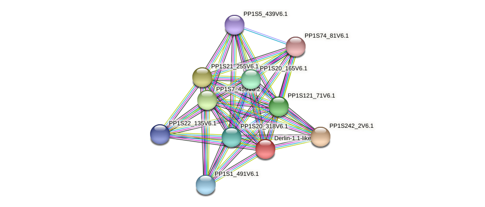 PP1S213_66V6.1 protein (Physcomitrella patens) - STRING interaction network