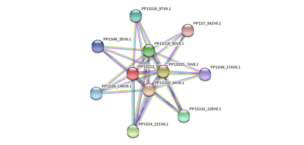 PP1S213_95V6.1 protein (Physcomitrella patens) - STRING interaction network
