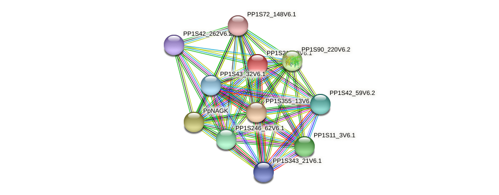 PP1S213_9V6.1 protein (Physcomitrella patens) - STRING interaction network