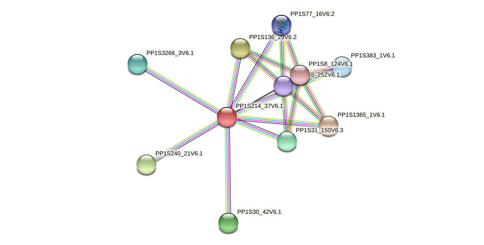 PP1S214_37V6.1 protein (Physcomitrella patens) - STRING interaction network