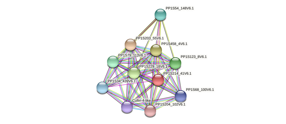 PP1S214_41V6.1 protein (Physcomitrella patens) - STRING interaction network