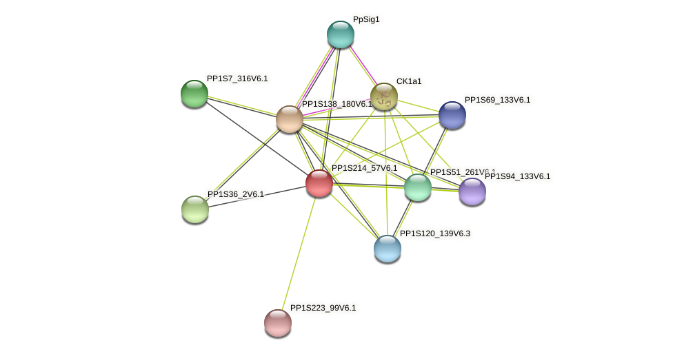 PP1S214_57V6.1 protein (Physcomitrella patens) - STRING interaction network