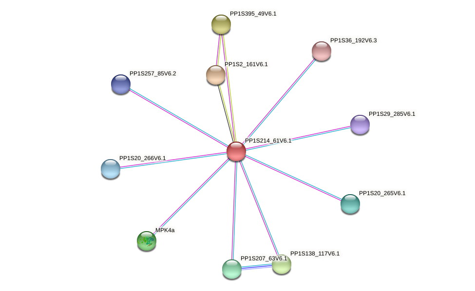 PP1S214_61V6.1 protein (Physcomitrella patens) - STRING interaction network