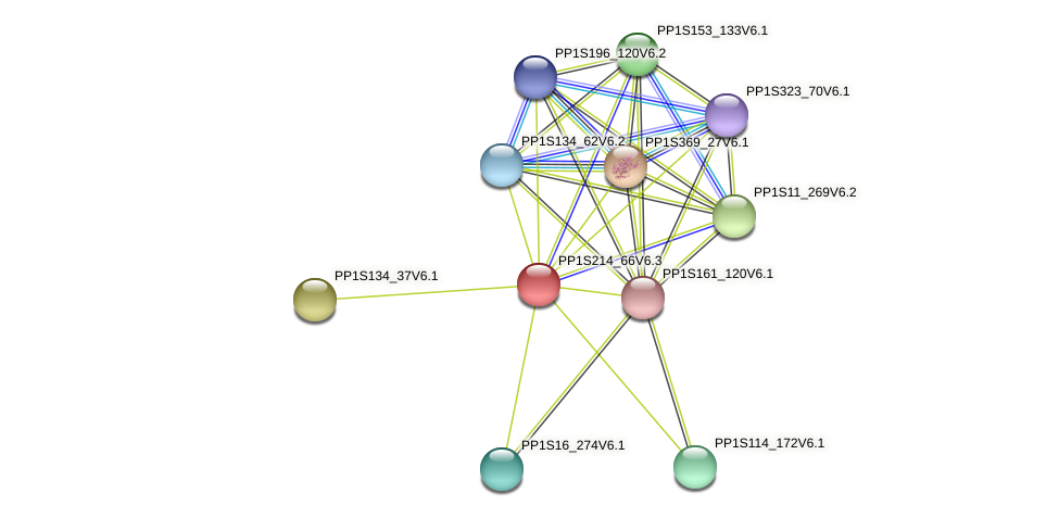 PP1S214_66V6.2 protein (Physcomitrella patens) - STRING interaction network