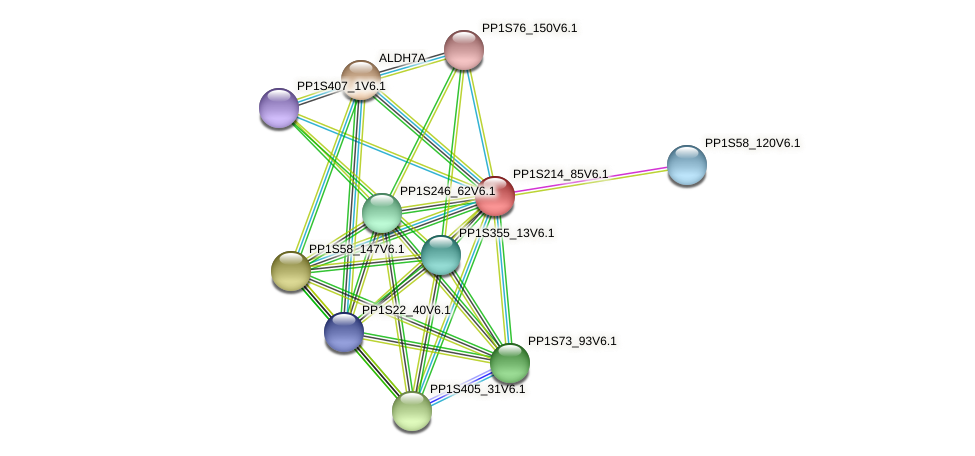 PP1S214_85V6.1 protein (Physcomitrella patens) - STRING interaction network