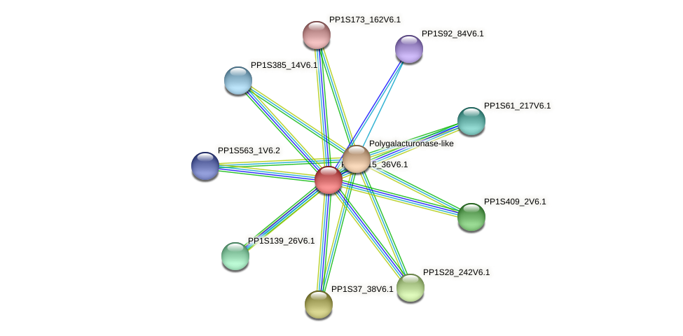 PP1S215_36V6.1 protein (Physcomitrella patens) - STRING interaction network